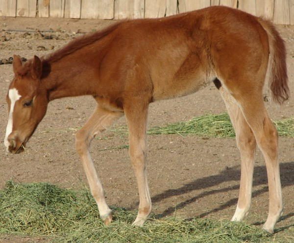 Play Smart Doc (Filly)
